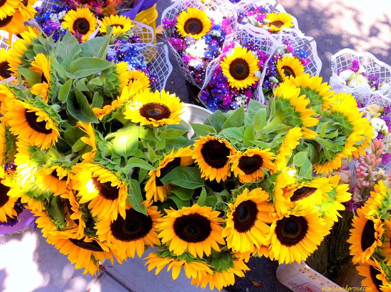 carlsbad_sunshine_web