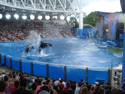 One Ocean at Sea World