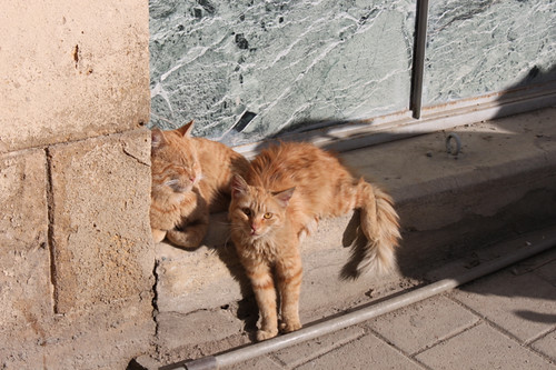20131210_9284_Nicosia-ginger-cats copy