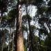 통영 미래사 편백나무숲