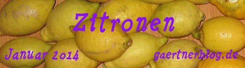 Garten-Koch-Event Januar 2014: Zitronen [31.01.2014]