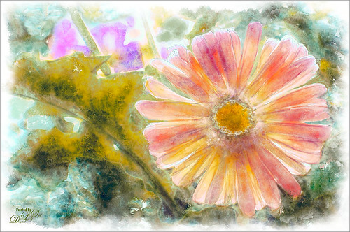 Image of a pink gerbera post-processed in Corel Painter