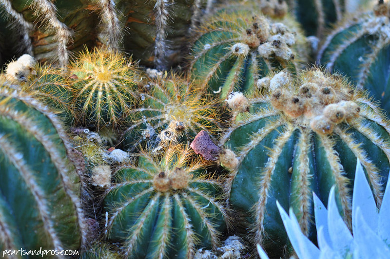 quail_cacti_web