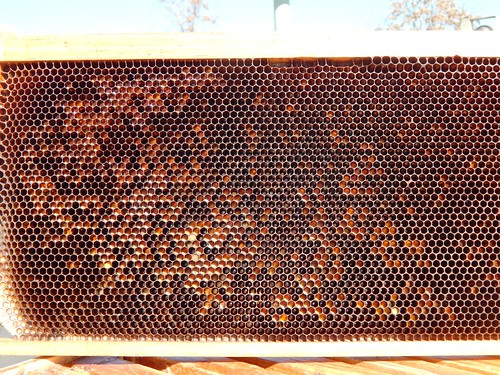 Honey comb from the hive