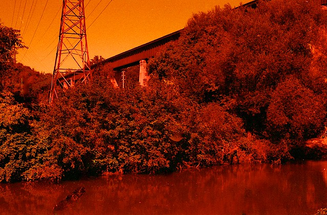 Red Scale - Don Valley