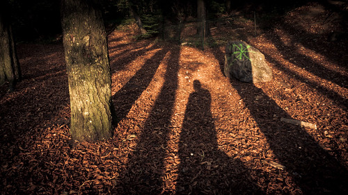 Autumn Fantasy : Longer Shadows, Shorter Days (Bois des Oblats, Grivegnée, Belgique) - Photo : Gilderic