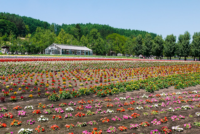 Hokkaido_day6_29