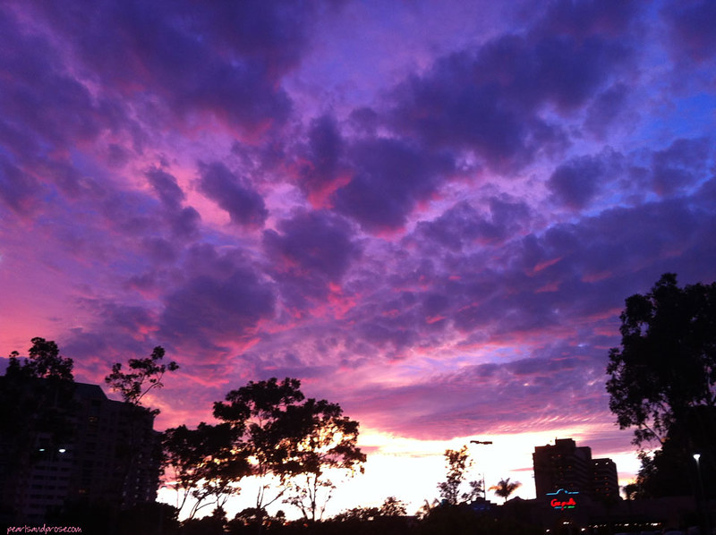 purple_sky_web