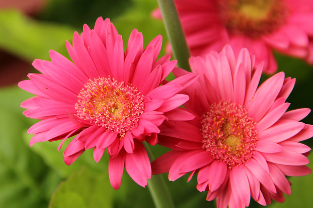 20140629_Flowers_024