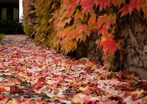 Autumnal garden path by nifwlseirff