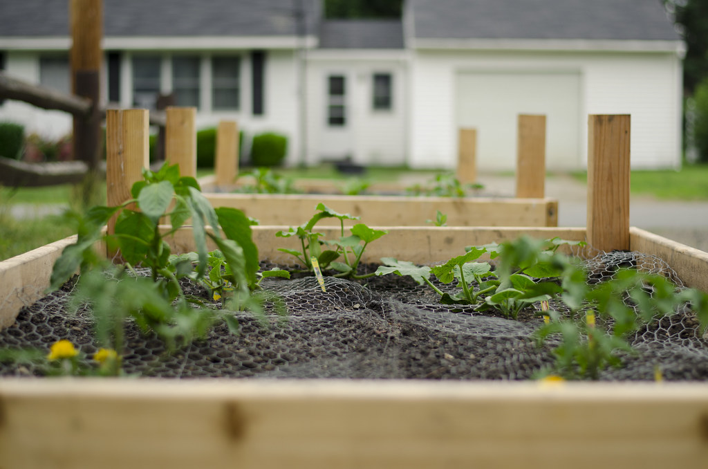 garden 2014 // week one 4