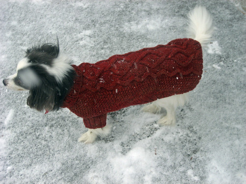 Papillon dog sweater handmade Coopworth wool