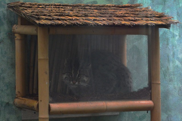 Fishing Cat Crib