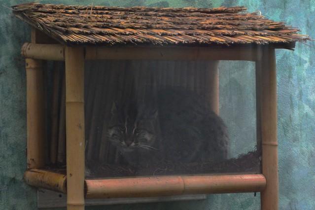 Fishing Cat Crib
