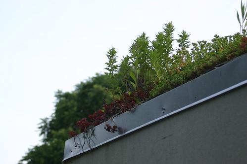Green roof at Clark Cooper Community Gardens