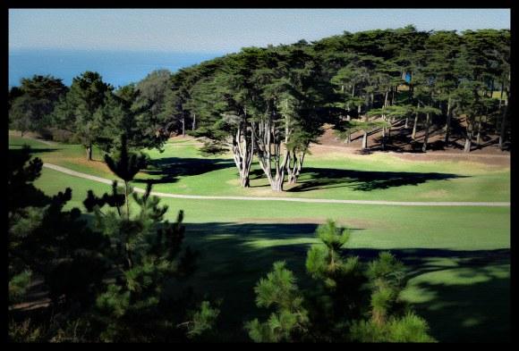 Cypress Grove - San Francisco - 2013