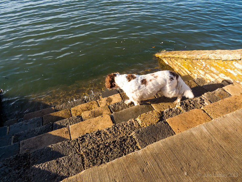 Max is still scared of the water lapping against the steps