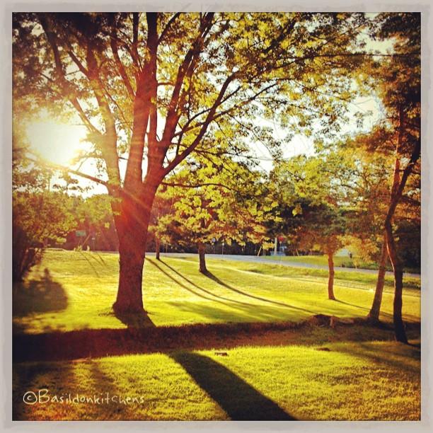 Aug 5 - early {early morning sun in my front yard. It's magical} #fmsphotoaday #early #sunrise #lawn #sunshine #shadows #princeedwardcounty