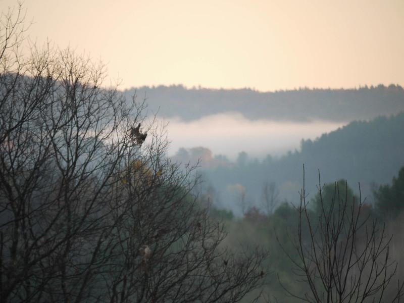 Fog cradle