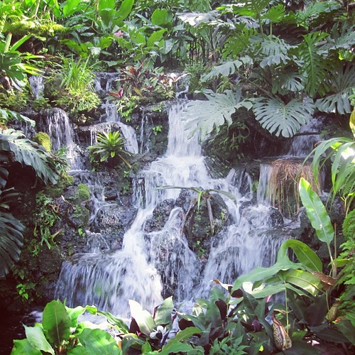 #waterfall at #singapore botanic gardens by @MySoDotCom