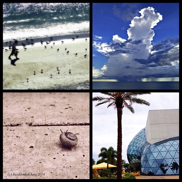 4/1/2014 - 2013 most memorable moments {there were lots of them but our Florida vacation was the most fun} #photoaday #vacation #florida #beach #weather #snail #salvidordali #daligallery #madeirabeach #stpetersburg #clouds