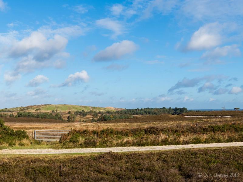 A sunny day on Canford Heath
