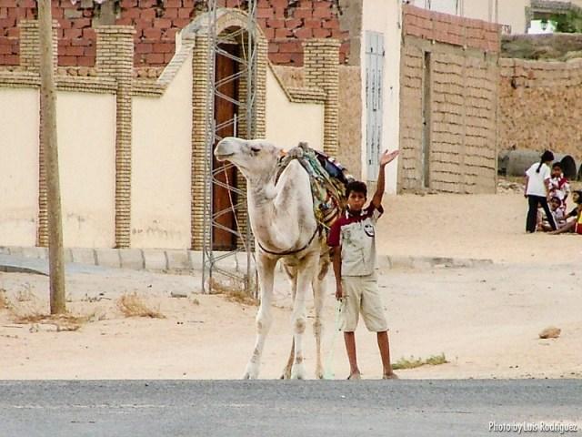 postalez de tunez-11