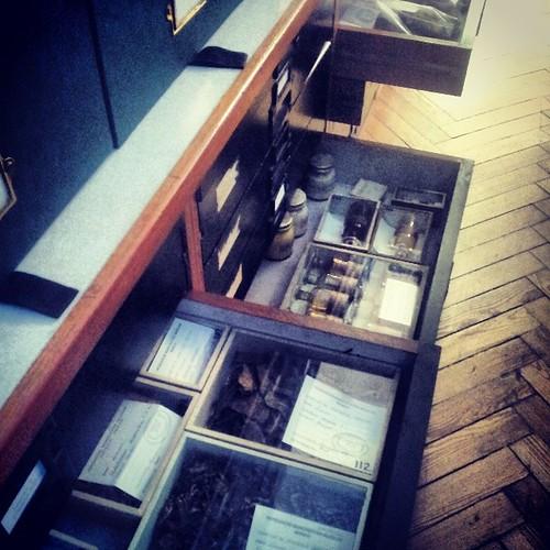 #Manchester #museum #herbarium #botany #flowers