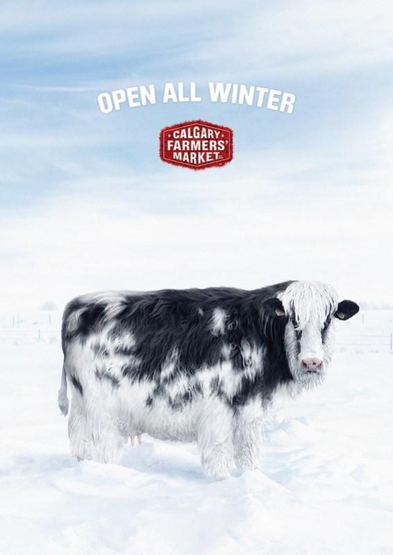 Calgray Farmer Market - Winter Cow
