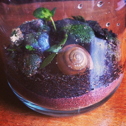 """Rescue #terrarium no. 4 """"Elias"""" ready for his new home with @ponyowawa What do you want to rescue?"""