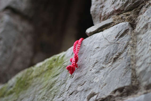 Image result for scarlet cord
