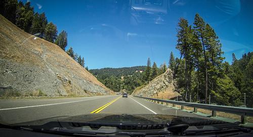 Coastal Redwoods and Fog-052