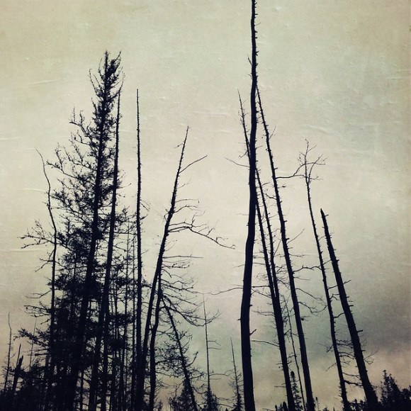 Emotional Response to Swamp Trees
