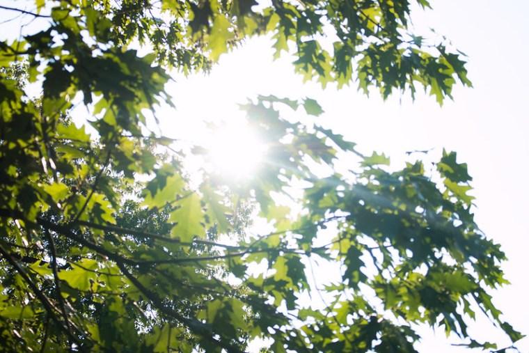 tree full of sunshine