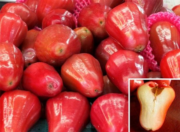 Manzana rosa, Syzygium samarangense