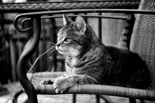 Cat ###9