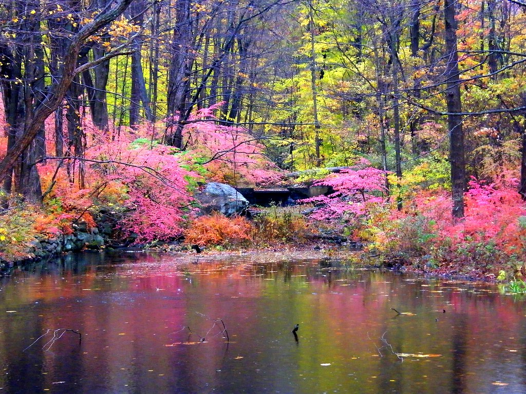 Pink Autumn Reflection