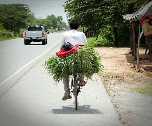 Local bikes, Cambodia