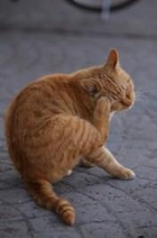 Cat scratching an itch