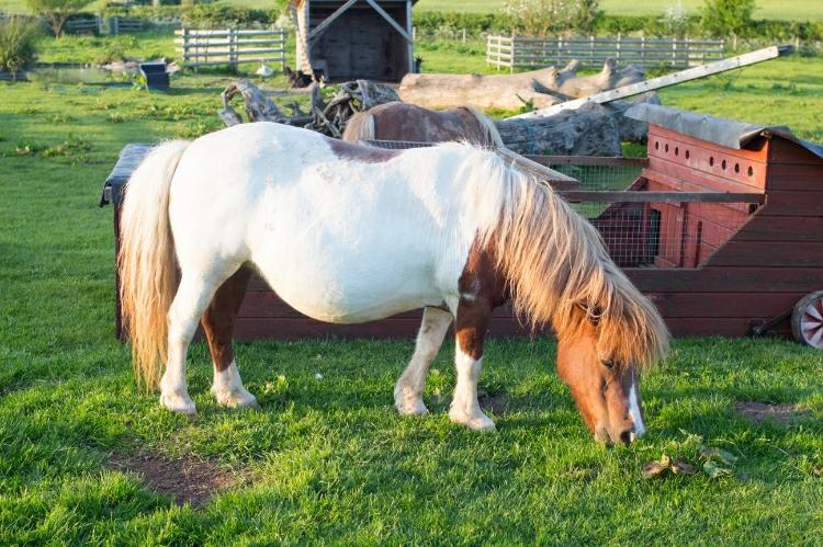 Happy Glamper - pony