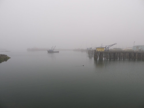 Foggy Morning Walk in Crescent City
