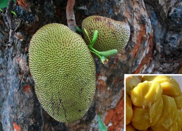 Jackfruit, fruta de Asia