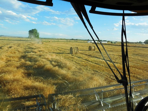 Down wheat and bales