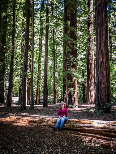 Coastal Redwoods and Fog-060