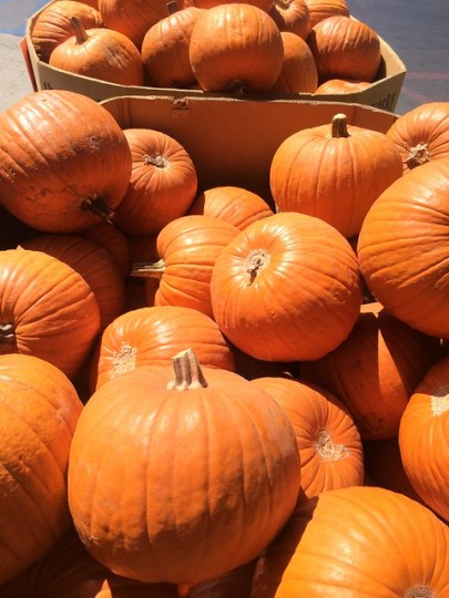 The pumpkining is upon us