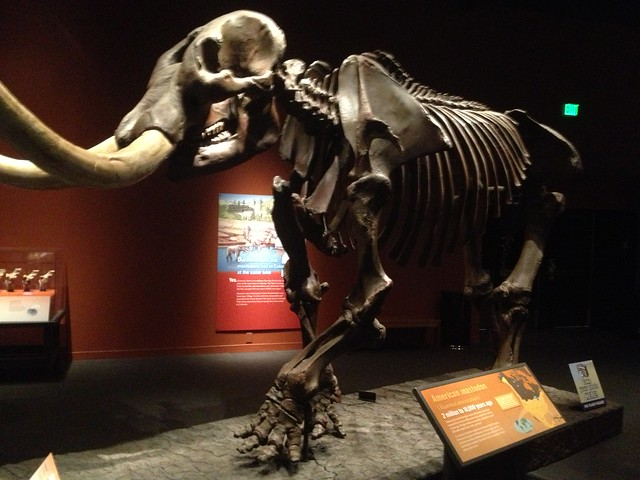 Picture from the Denver Science & Nature Museum