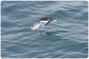 South Shetland Islands (2)