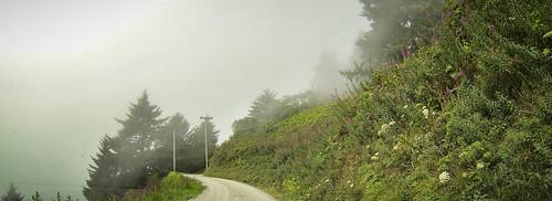 Redwoods and Elk-081