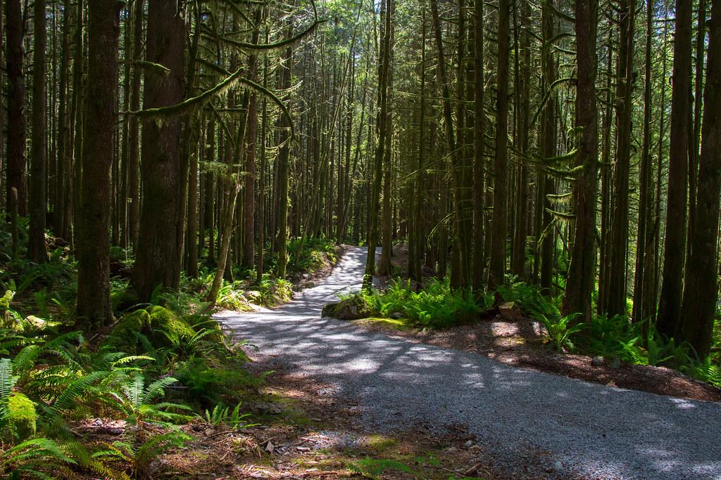 Lower Falls Trail
