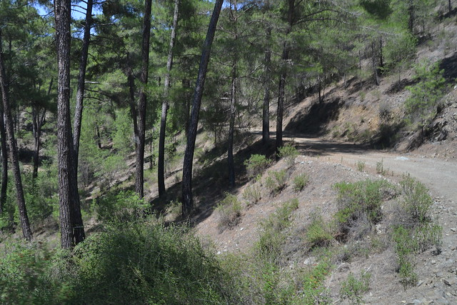 In the Paphos Forest, Cyprus